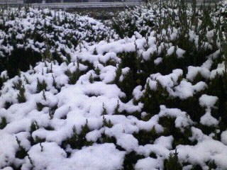 雪景色o(^o^)o