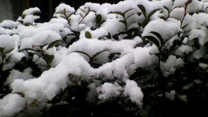 本日、積雪なり〜。